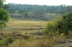 Beautiful Landscape View Of Himachal Pradesh India