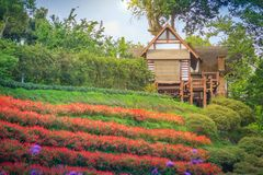 Beautiful landscape view of red flower garden and the small cott Stock Image