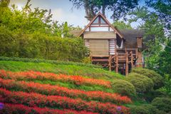 Beautiful landscape view of red flower garden and the small cott Royalty Free Stock Photos