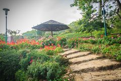Beautiful landscape view with red flowering on the stone stairwa Stock Image