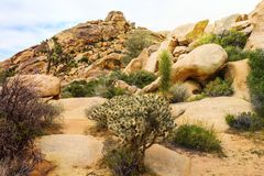 Beautiful landscape view of boulders, trees, cactuses from the hiking trail in Joshua Tree National Park, California, USA. Stock Photo