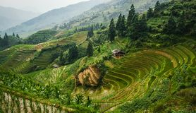 Beautiful landscape view of rice terraces and house. Longsheng Rice Terraces. China. Beautiful landscape view of rice terraces and house. Longsheng Rice royalty free stock image
