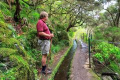 Levada hike Madeira in nature royalty free stock photography