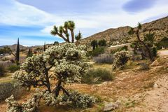 Beautiful landscape view of Southern California town of Yucca Valley, San Bernardino County, California, United States. Sunny summer day stock images