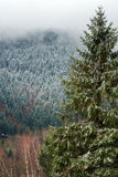 Beautiful landscape view of winter forest Stock Image