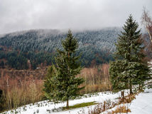 Beautiful landscape view of winter forest Royalty Free Stock Photo