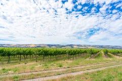 Beautiful landscape of vineyard and picturesque sky. McLaren Vale, South Australia stock image