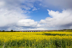 Beautiful landscape with vivid field of rape seed Royalty Free Stock Photos