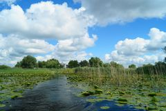 Beautiful landscape with water lilies of the Danube Delta, Romania Delta Dunarii. Beautiful landscape with water lilies of the Danube Delta, Romania stock images