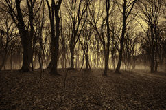 Beautiful landscape of winter forest at Sunset time. Sun light in the misty dead autumn forest. Azerbaijan Gabala Ismailli. Topchu Stock Photography