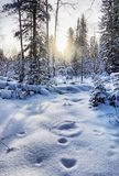 Beautiful landscape of the winter woodland with snow crowned fir trees and snowy glade on foreground. Beautiful landscape of the winter coniferous woodland with royalty free stock photography