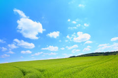 Beautiful Landscape With Growing Wheat Stock Images