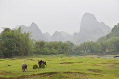 Beautiful landscape Yangshuo Stock Image