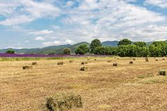 Beautiful landscape , yellow field with haystacks, lilac flowers, green trees and mountains, and blue sky with big white clouds royalty free stock images