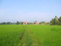 Beautiful landscape of young green rice fields with typical red tile roof houses in Hoi An. Vietnam Stock Photos