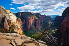 Beautiful Landscape in Zion National Park,Utah Stock Photos