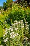 Beautiful landscaped summer garden Stock Photography