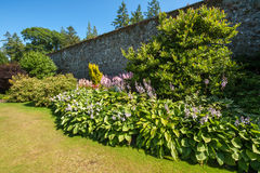 Beautiful landscaped summer garden Stock Photography