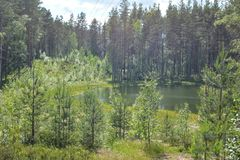 Small lake hid among the trees stock images