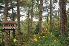 Beautiful landscapes with little bird house in the forest stock images