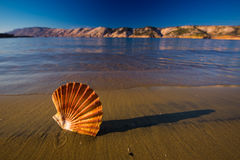 Beautiful landscapes, shells on the beach in Croatia Royalty Free Stock Photography