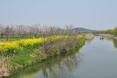 Beautiful landscapes of spring. White sakuras and yellow cole flowers are blooming by the stream stock photo