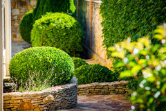 Beautiful landscaping with beautiful plants Royalty Free Stock Photography