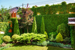 Beautiful landscaping with beautiful plants Stock Photography