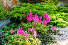 Beautiful landscaping with beautiful plants Royalty Free Stock Image