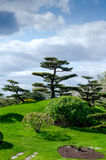 Beautiful landscaping in the Chicago Botanic Gardens. Uniquely sculpted trees create a beautiful design in the Royalty Free Stock Images