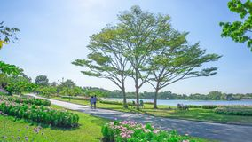 Beautiful landscaping and good maintenance of public park, groups of big tree on green grass lawn and garden of flowering plant stock photography