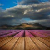 Beautiful landscpae of lavender field leading to mountain range Royalty Free Stock Image
