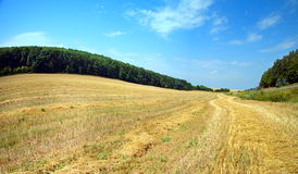 Beautiful landskape and road in a summer field Royalty Free Stock Image