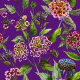 Beautiful lantana or brazil verbena flowers with green leaves on purple background. Seamless summer floral pattern. Watercolor painting. Hand drawn Royalty Free Stock Image