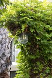 Beautiful lantern in the arch next to the palm tree stock photography