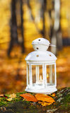 Beautiful lantern in autumn forest Royalty Free Stock Photos