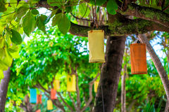 Beautiful lanterns hanging on asian trees Royalty Free Stock Photos