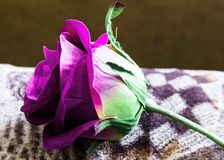 Beautiful large artificial purple rose view side royalty free stock image