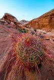 Beautiful Large Cactus Stock Photos