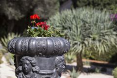 Beautiful large forged vase with red flowers in the park on a bl. Urred background of ornamental plants and green trees in the light of day Royalty Free Stock Photography
