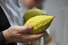 Beautiful large hands hold a ritual Citron Royalty Free Stock Images