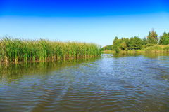 Beautiful large lake with reeds Royalty Free Stock Photo