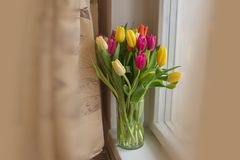 Large multi-colored tulips yellow orange and red in a glass vase on the windowsill gift favorite. Beautiful large multi-colored tulips yellow orange and red in a stock image