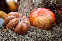 Beautiful and large pumpkins Stock Images