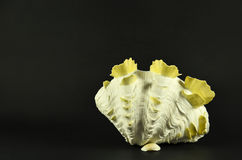 Beautiful large seashell standing, isolated on black background Royalty Free Stock Image