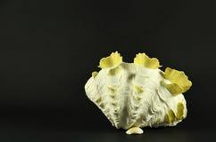 Beautiful large seashell standing, isolated on black background Royalty Free Stock Image