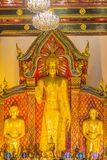 Beautiful large standing golden Buddha image with ceiling interior decoration, named Phra Chao Attarot at Wat Chedi Luang (temple royalty free stock images
