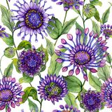 Beautiful large vivid African daisy flowers with green leaves on white background. Seamless bright floral pattern. Watercolor painting. Hand painted stock illustration