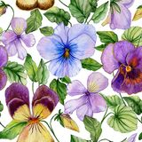 Beautiful large vivid viola flowers with green leaves on white background. Seamless spring or summer floral pattern. Watercolor painting. Hand painted Stock Images