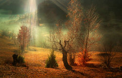 Beautiful late autumn morning Royalty Free Stock Photo